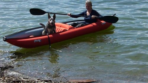 Paddling with a canine companion