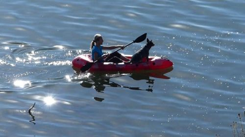 Paddling the Packlite with a canine companion
