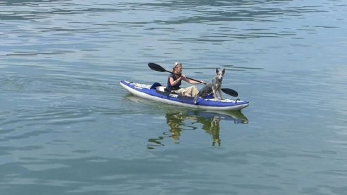 Columbia One HB inflatable kayak on the water with furry friend.