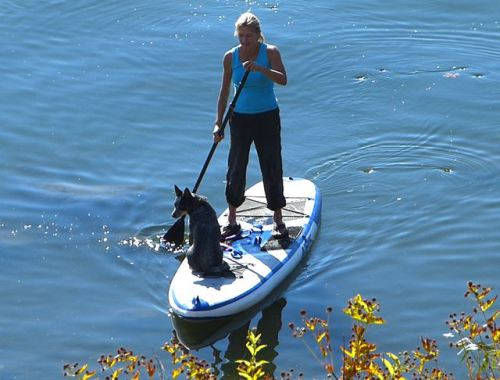 Paddling with a furry friend